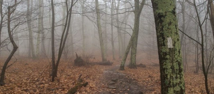 Photo of Appalachian Trail in the fog. ©2018 www.JeffRyanAuthor.com