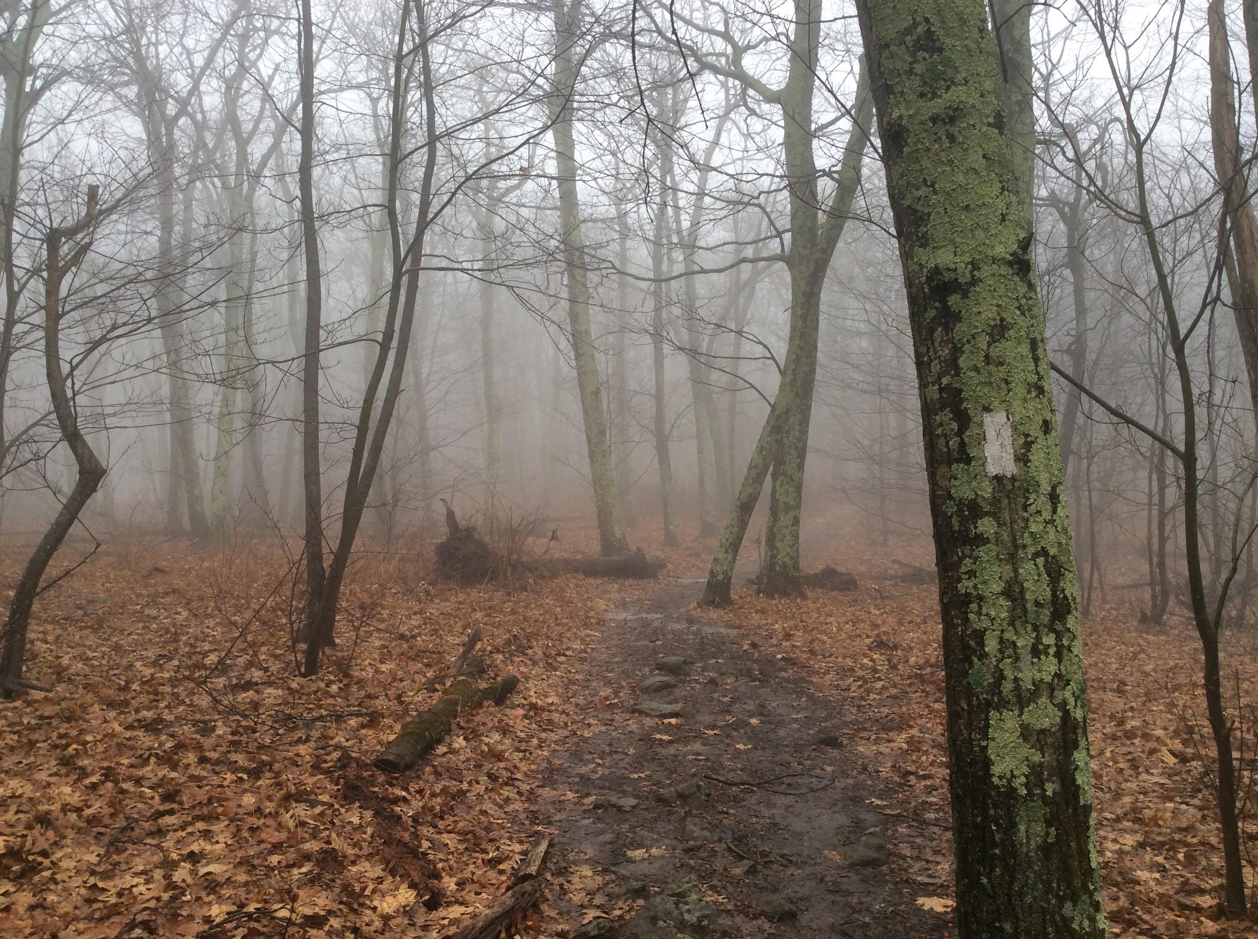 Photo of Appalachian Trail in the fog. ©2018 www.JeffRyanAuthor.com